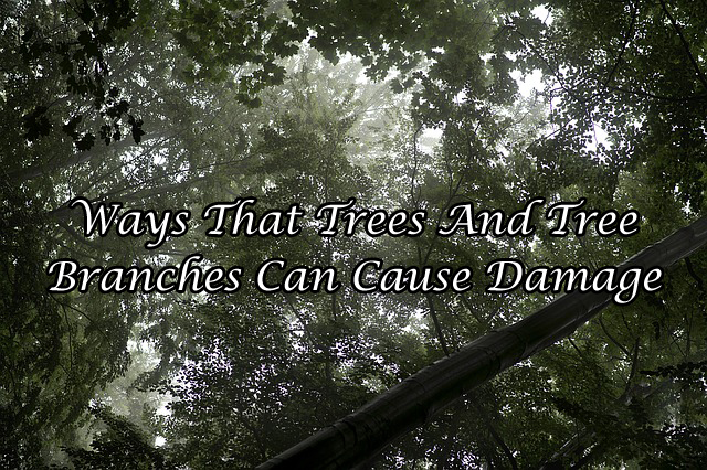 Ways That Trees And Tree Branches Can Cause Damage