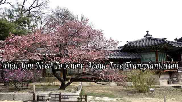 What You Need To Know About Tree Transplantation