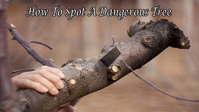 How To Spot A Dangerous Tree